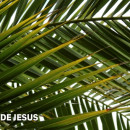 O MEU LUGAR NA PAIXÃO DE JESUS